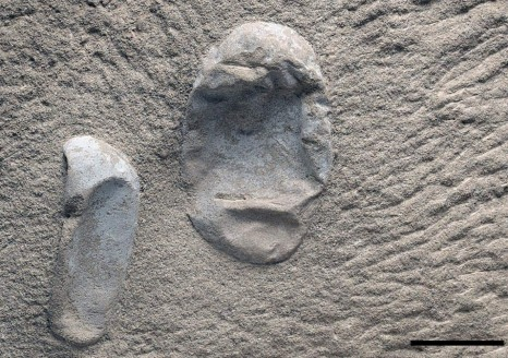 Two of the newfound pterosaur eggs. Paleontologists say that they have found hundreds of eggs so far, including at least 215 within a single sandstone block. More are probably hidden within the block's interior.