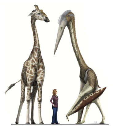 Arambourgiania vs giraffe vs the Disacknowledgement redux Witton ver 2 low res.jog